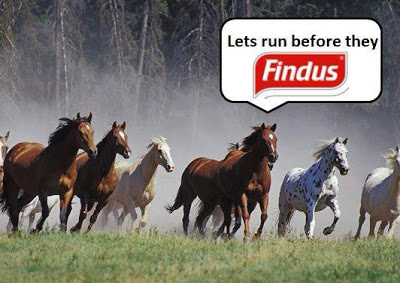 Findus - pronounced  'fin- dus' was a major user of the equine delight