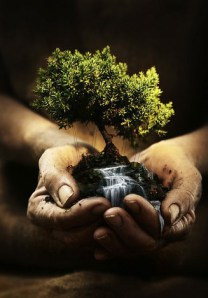 hands-of-the-gardener